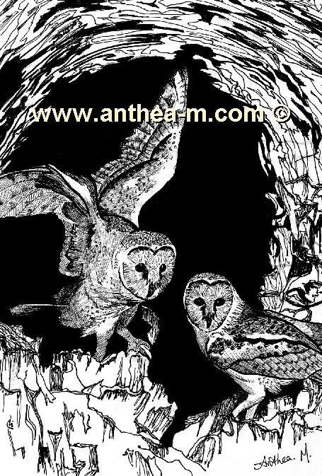 owlscopy